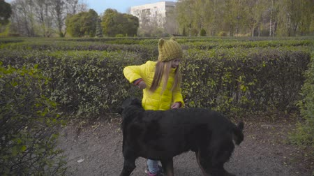 уик энд : Cute little Caucasian girl in casual clothes playing with black dog between green bushes. Beautiful faithful doberman spinning around his human friend dressed in yellow coat, mustard hat and jeans Стоковые видеозаписи