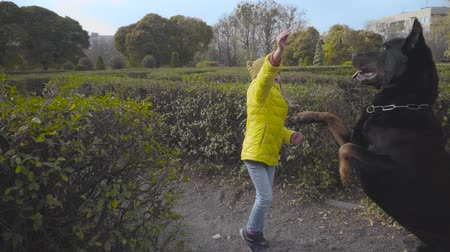 Pretty Caucasian girl in mustard hat and yellow coat raising hand up and her dog standing on hind legs. Child playing with big black doberman in the autumn park