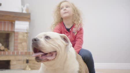 buldog : Close-up of white and brown bulldog and pretty Caucasian little girl at the background. Child resting with her animal friend indoors. Cheerful kid with dog