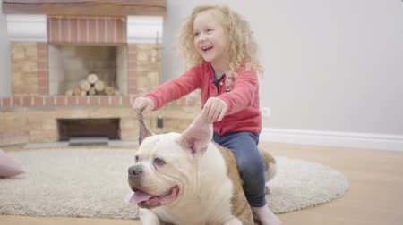 buldog : Charming blond Caucasian girl holding bulldogs ears and laughing. Little child having fun with her pet at home. Patient pet happy to spend time with his human friend