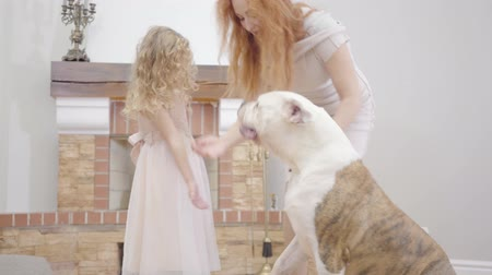 buldog : Little Caucasian blond girl feeding bulldog with her mother. Adult redhead woman spending free time with daughter and pet indoors. Family resting at home