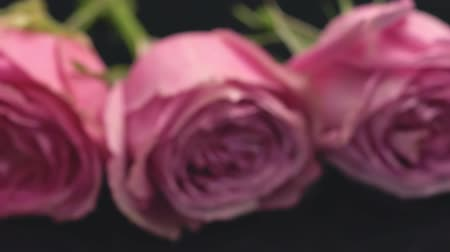 Background of the rose bouquet.