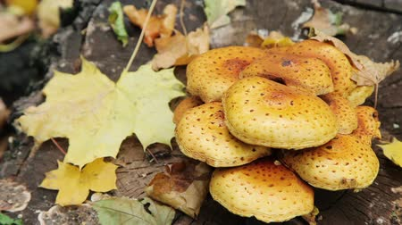houba : Forest Mushrooms slider shoot