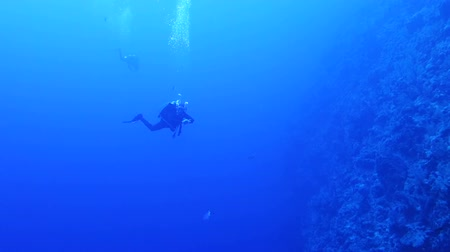 potápěč : Diver swimming over Coral Reef