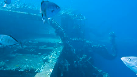 salem express : Ship wreck Salem Express on seabed underwater in Red Sea, Egypt. Full HD underwater footage. Stock Footage