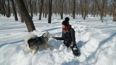 tlapky : Beautiful girl playing with malamute dog on the snow outdoors in slow motion.