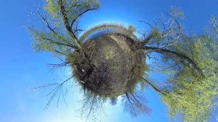 мини : Tiny Little Planet 360 Degree - a lake and flooded land in the spring. Landscape panorama. Стоковые видеозаписи