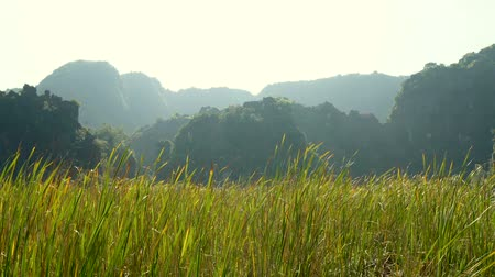 ninh : Panorama view of beautiful karst scenery, river and rice paddy fields at Tam Coc, Ninh Binh Province, Vietnam.