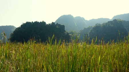 ninh : Panorama view of beautiful karst scenery, wetlands and rice paddy fields at sunset in Tam Coc, Ninh Binh Province, Vietnam.