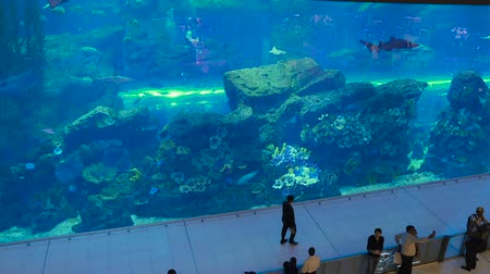 school of shark : DUBAI, UAE - DECEMBER 12, 2018, People watching fish at the oceanarium inside Dubai Mall. The Dubai Mall is the worlds largest shopping mall. Stock Footage