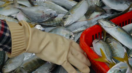 local : Workers sorting fresh fish at the market. Fish industry in Asia.