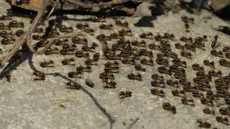 termite : Macro shoot of a group of termites walking on the ground in the jungle.