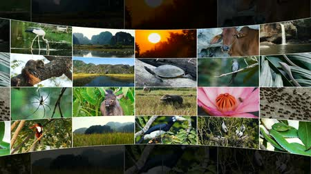 video reel : Streaming media concept. Rotating screens showing multiple nature themed videos. Loopable animation.