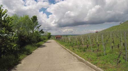 лоза : Vineyard view in bavaria germany with cloudy sky Стоковые видеозаписи
