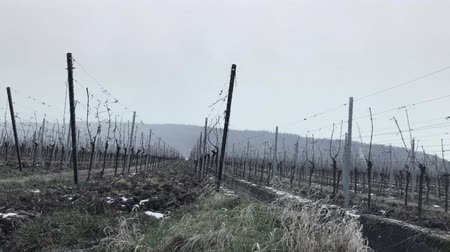Snowy static scene view of the vineyards in winter Vídeos