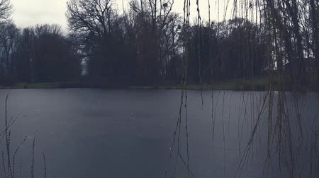 Frozen pond in a dark creepy park in winter Vídeos