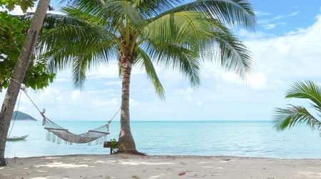 coconut palm tree : Hammock and palm trees on the beach Stock Footage