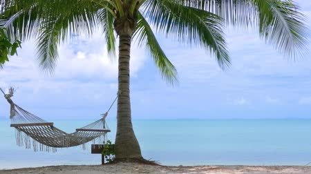 coconut palm tree : Palm tree with hammock on the beach Stock Footage