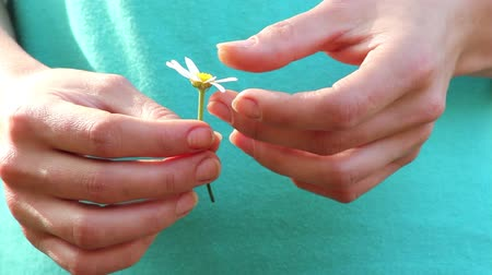 sonhar : camomile in the hands