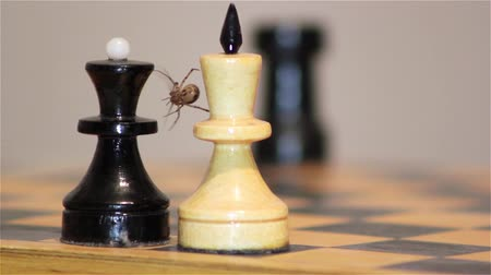 xadrez : chess game, chess spider