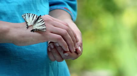 bondade : releasing from hands butterfly,butterfly on the hand Stock Footage