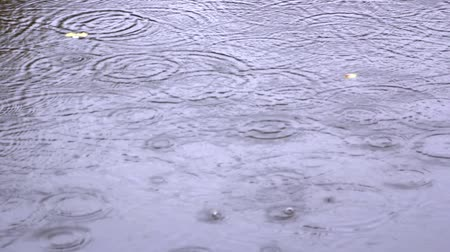 chuva : raindrops on the puddle