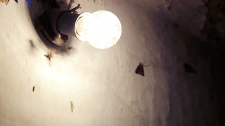 lamba : Butterflies flock to the light bulb burning. Moths fly near the lamp. Stok Video