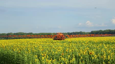 flowers oil : The tractor sprinkles field with a sunflower. The sprayer processes the pesticide plantation helianthus plantation, close up. Stock Footage