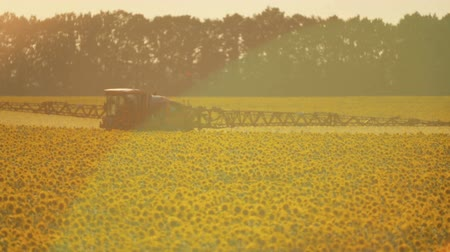spraying : The tractor sprinkles field with a sunflower. The sprayer processes the pesticide plantation helianthus plantation, close up. Stock Footage