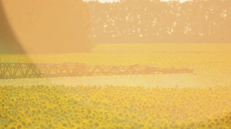 sunflower seed : The tractor sprinkles field with a sunflower. The sprayer processes the pesticide plantation helianthus plantation, close up. Stock Footage