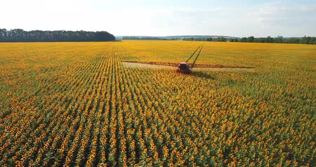 flowers oil : The tractor sprinkles the field with a sunflower. The sprayer processes the pesticide plantation helianthus plantation 4k video.