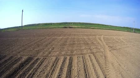 weeding : View of the field from the tractor. Video shooting from the cab.