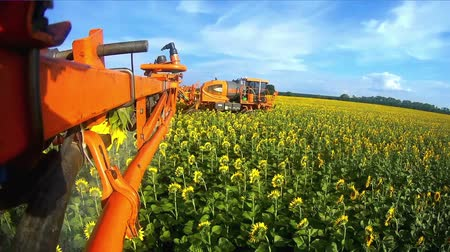 tryska : View from the camera on the rod sprayer blooming sunflower. Videography of the operating sprayer in the field of the sunflower.