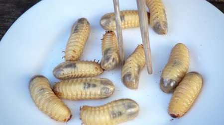white rhino : Raw fresh beetle larvae on a plate. Exotic Asian cuisine with insect larvae. Stock Footage