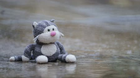 peluş : Soft childrens toy cat, forgotten in a puddle in the rain. Old discarded childrens toy.