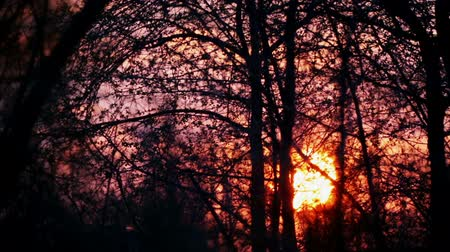 through leaves : Sunset in the trees and branches. The sun goes down in the trees and bushes.