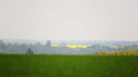 kolza tohumu : A set of video files blooming canola fields. Blooming rapeseed fields in the video collection.