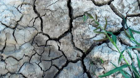 засушливый : Cracked, dried surface of the earth. Cracks in the dried dry ground. Стоковые видеозаписи