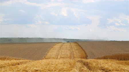 трактор : Combine harvesting a wheat field. Стоковые видеозаписи