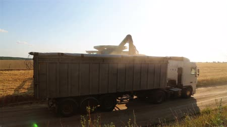kirakodás : Combine harvester unloads grain in the box. Unloading wheat seeds