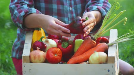 ピーマン : Girls hands holds a box with fresh vegetables. Fresh vegetables in a box on the hands of a young girl. 動画素材
