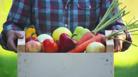 capsicum : Girls hands holds a box with fresh vegetables. Fresh vegetables in a box on the hands of a young girl. Stock Footage