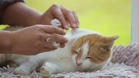 denetleme : Prevention and care of a homeless, homeless cat. Care and care for the homeless pet. Stok Video