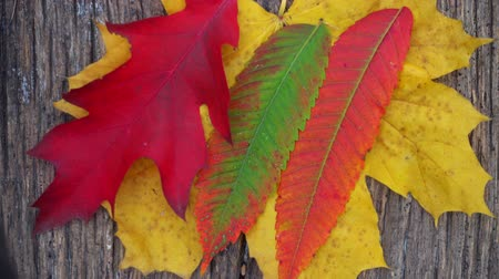 düşmeler : Composition of autumn leaves on the table. The wind blows the autumn leaf off the table. Stok Video