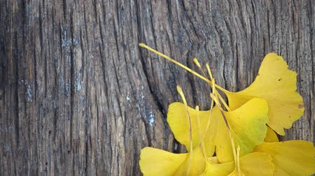 homeopatia : Composition of ginkgo biloba leaves on the table. Ginkgo biloba leaves on a texture board.