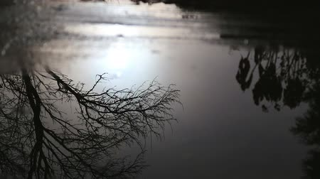 Reflection of the sun in a puddle. The sun, trees and bushes are reflected in a puddle after rain.