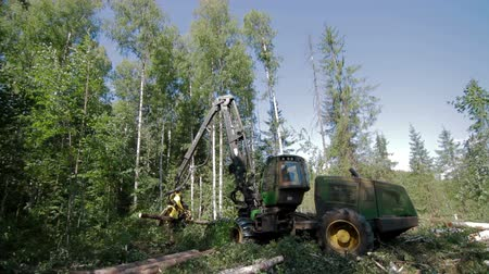 gatherer : Forest Harvester in action - cutting down tree Stock Footage