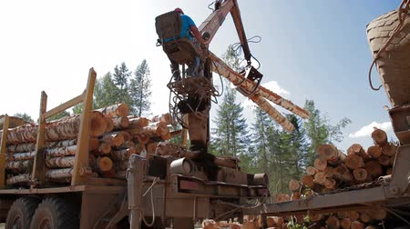 gatherer : Logging Truck at Lumber Mill loads tree trunk