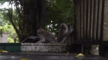 crab of the woods : Monkey jumping in Monkey Forest Bali Indonesia in slow motion