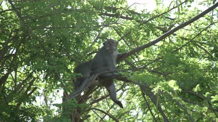 crab of the woods : Monkeys are sitting in Tree